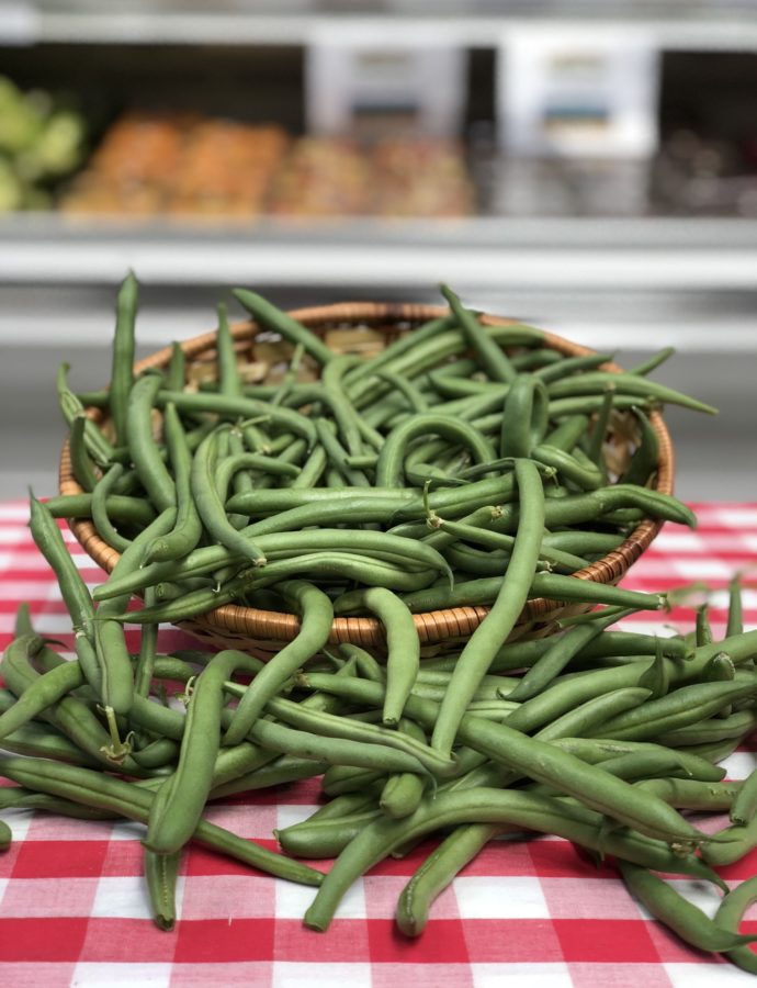 Green Beans – Blue Lake Harvest!
