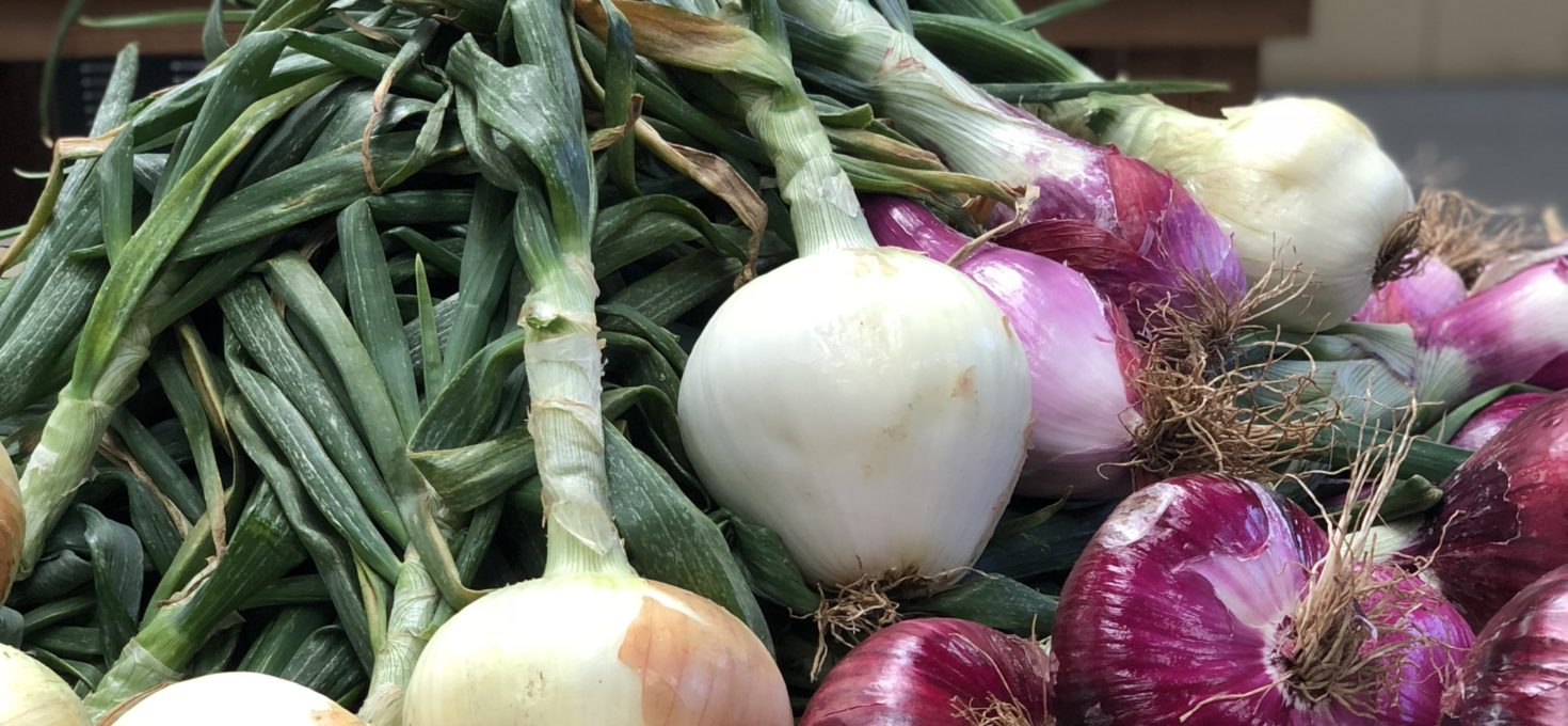 LJB Onions are in!